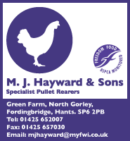 M J Hayward and Sons Pullets