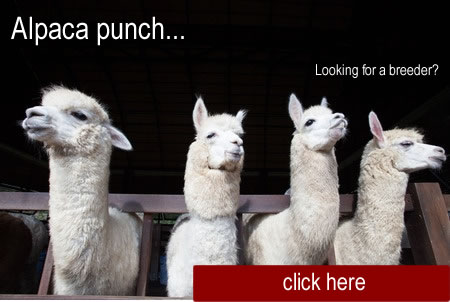 AlpacaProductsImage