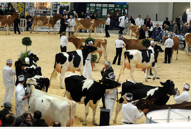 Royal Bath & West - Dairy Show 2016