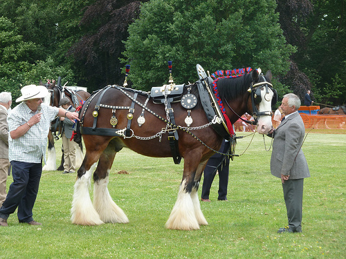 Shire Horse Society National Show 2017