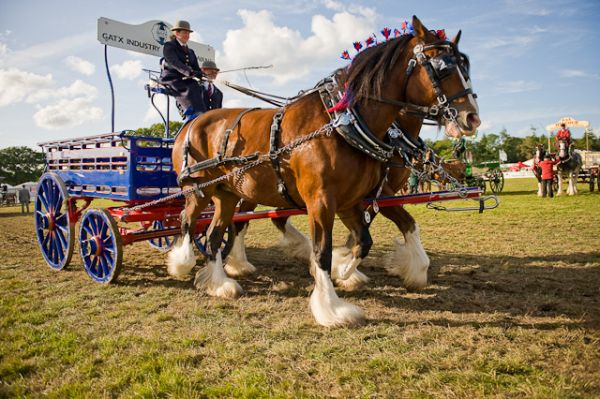 New Forest & Hampshire County Show 2016