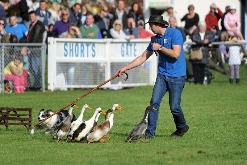 South of England Autumn Show & Game Fair 2017
