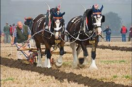 Southwell Ploughing Match & Show 2017