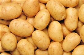 Potato Industry Event