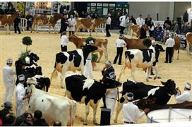 Royal Bath & West - Dairy Show 2017