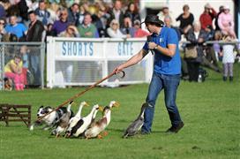 South of England Autumn Show & Game Fair 2017