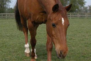 Foal Farm Animal Rescue Centre