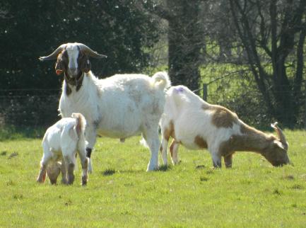 Hardwick Park Farm