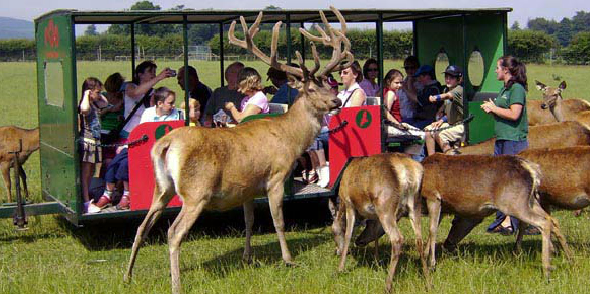 Scottish Deer Centre