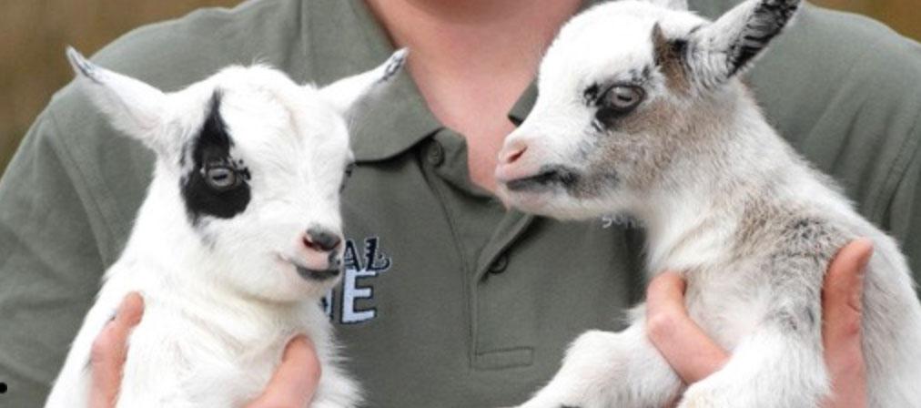 Rodbaston Visitor Centre Animal Zone