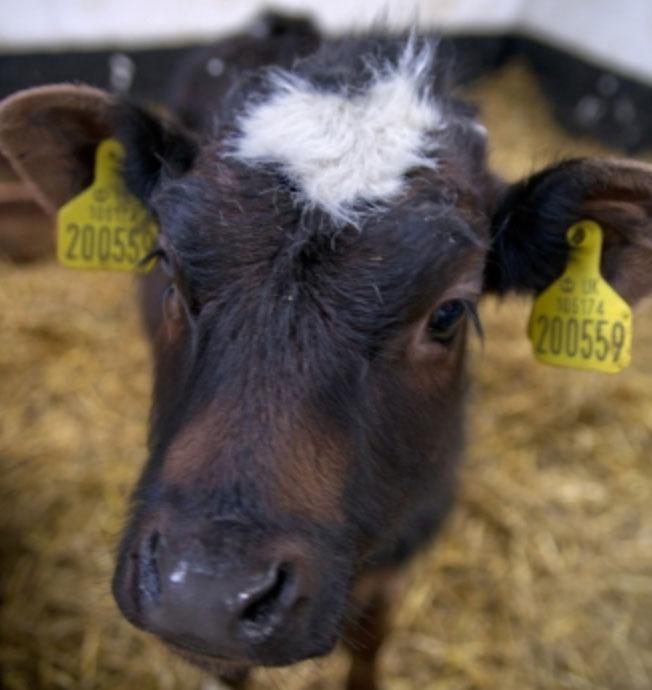 Tweddle Childrens Animal Farm