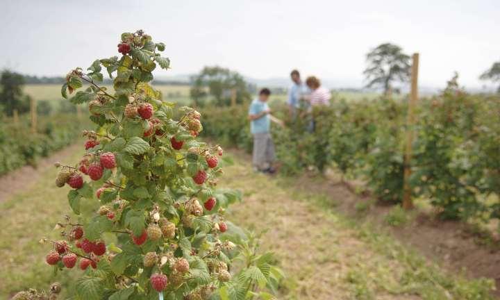 Charleton Fruit Farm