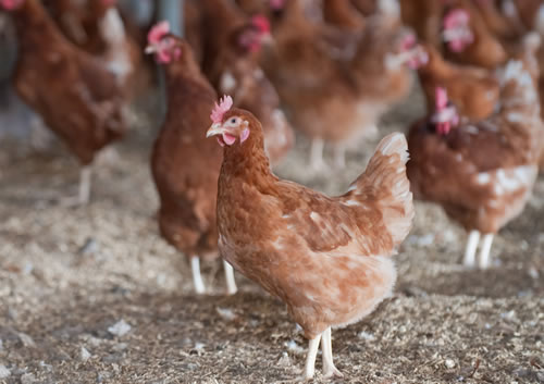 Egg producers could be forced out of the industry and supplies of UK free range eggs could be put at risk