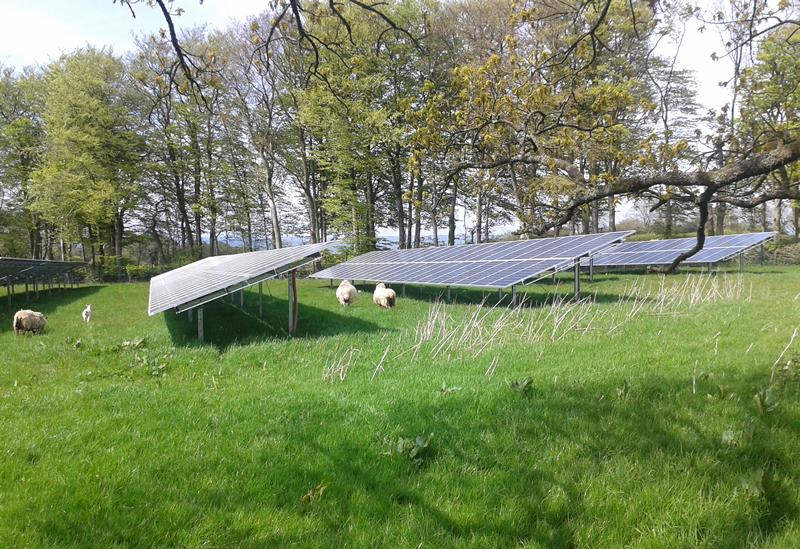 Free Range Solar Lamb Or Chicken Farming Uk News