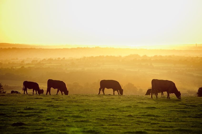 "Nigel Pulling, Chief Executive of the Yorkshire Agricultural Society said leaving Europe would be a ""leap in the dark"""
