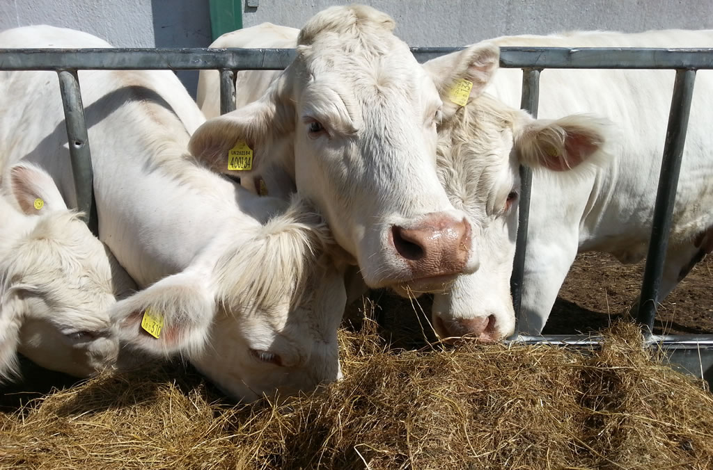 Study reveals that on average beef farmers in the study have reduced their carbon footprint by 4.6% a year