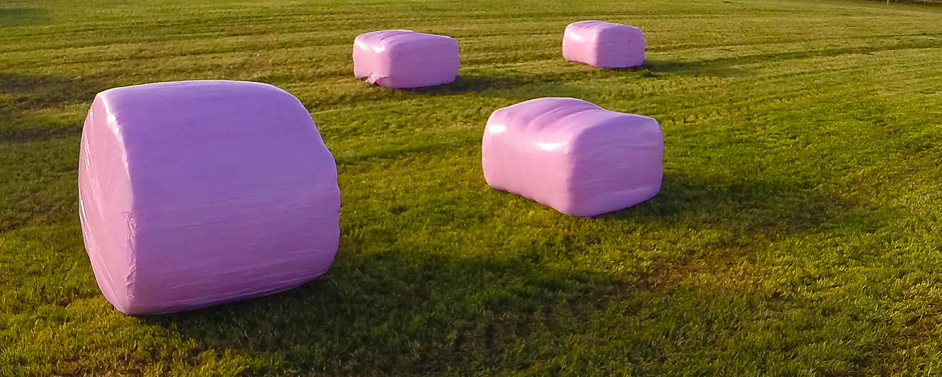 Pink silage bales are once again set to be a common sight in the countryside this season