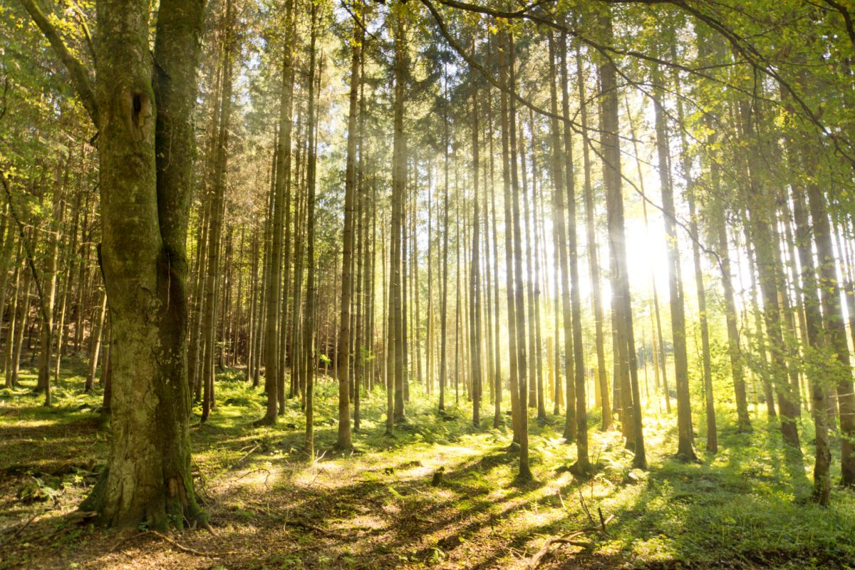 11 million trees represents a new forest the size of the City of Preston