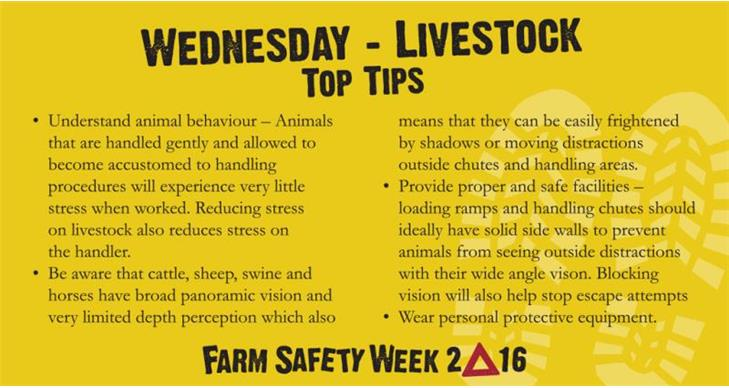 Farm Safety Week Day Three Taking Stock Of Livestock