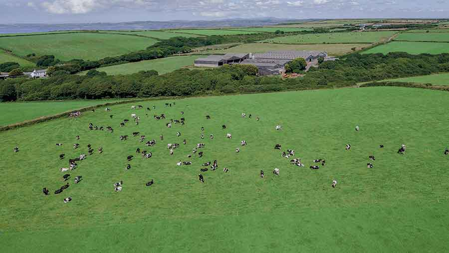 Broadmoor Farm currently houses a herd of 400 Holstein Friesans
