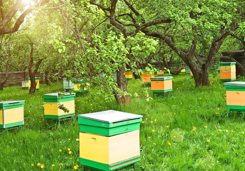 Bees help contribute to the food security of the UK