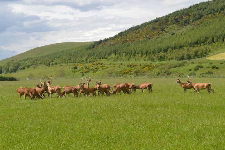 By some estimates the demand for venison has grown by 400% in recent years