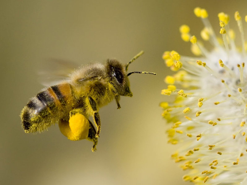 Wildlife and environment groups call for neonic pesticides ban to be retained - and extended to all crops
