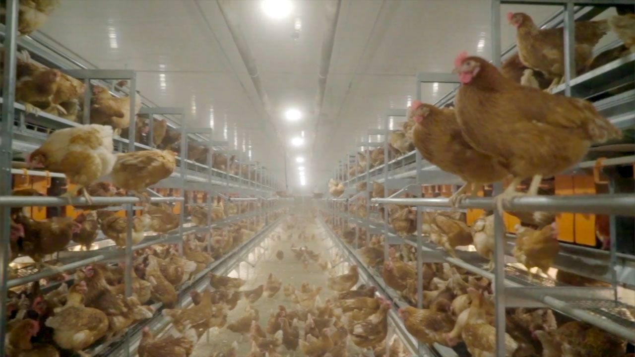 There has been more expressions of interest in barn since the retailers' cage-free commitment