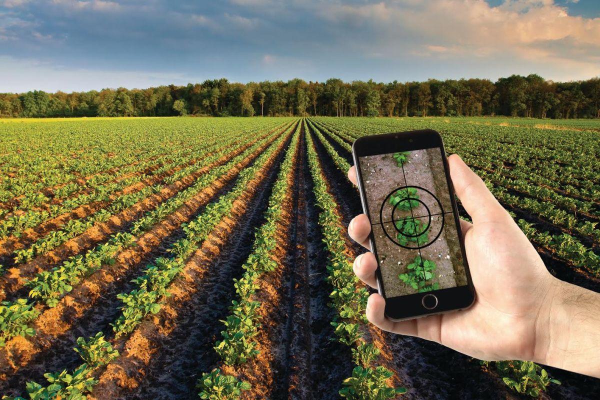 Smartphone app measures canopy