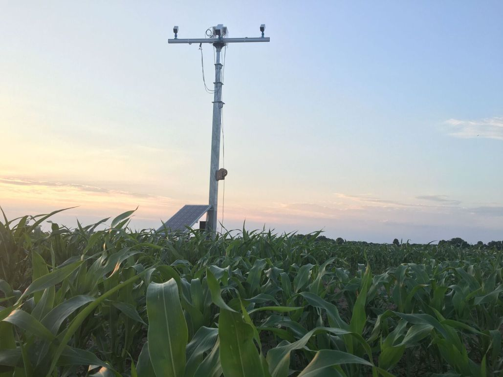 A mobile tower stands watch at the edge of the crop