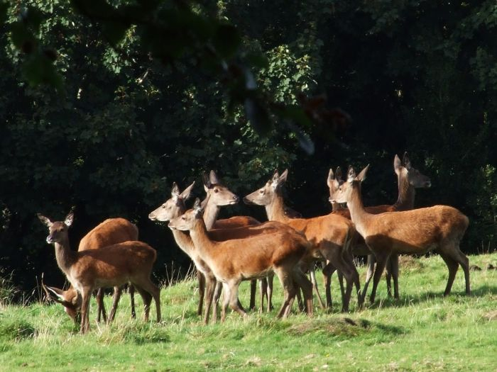 There is a growing consumer demand for venison