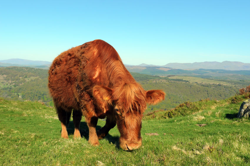 New incidence of bovine TB down 35% in IAA, report shows