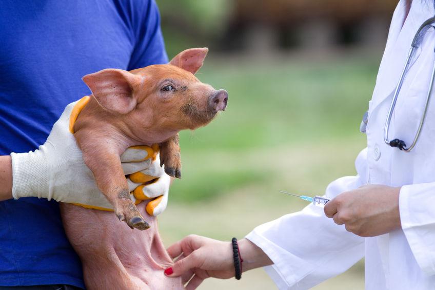 Pig vets have reassesed highest priority antibiotics