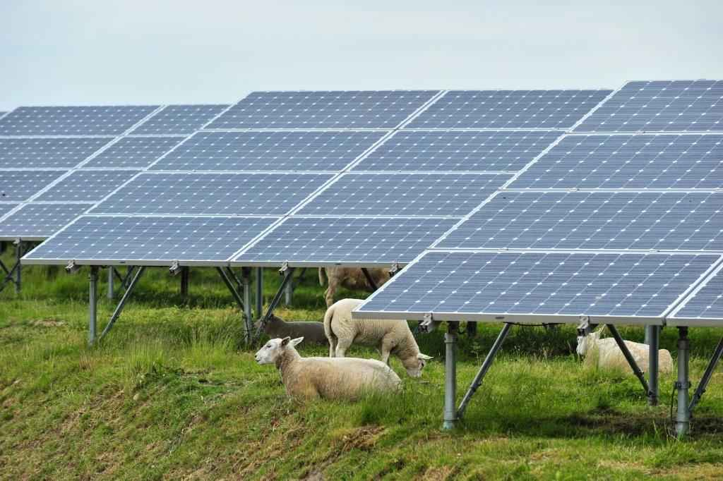 Farmers are increasingly turning to renewable energy as sources for diversified income (Photo: Antalexion)
