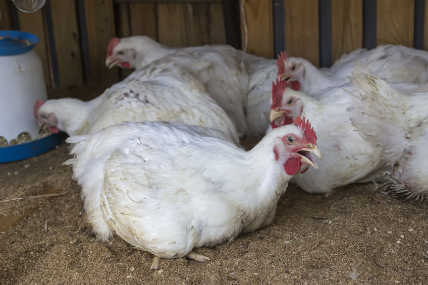 In the US, the government permits such practices as chlorinated chicken, which is banned in EU