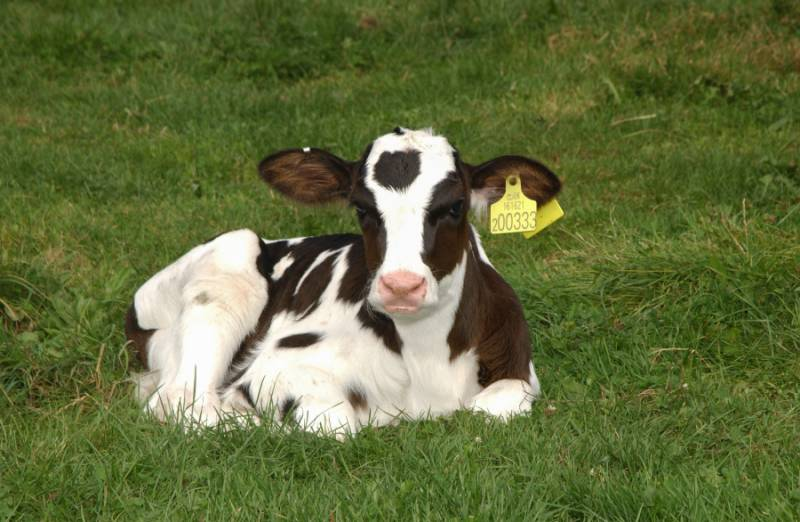 Less than 25% of farmers are using calf vaccination as a preventative measure