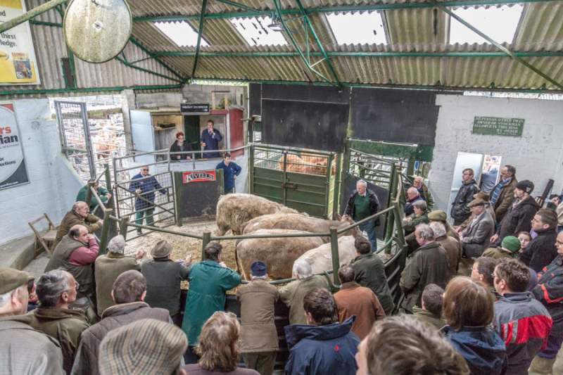 The council overlooked a proposal to close the livestock market
