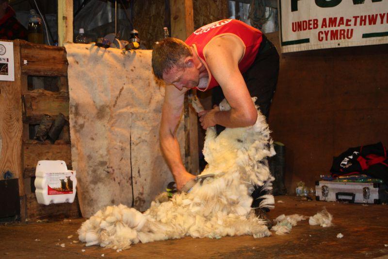 Gareth Owen achieving the single British blade shearing record