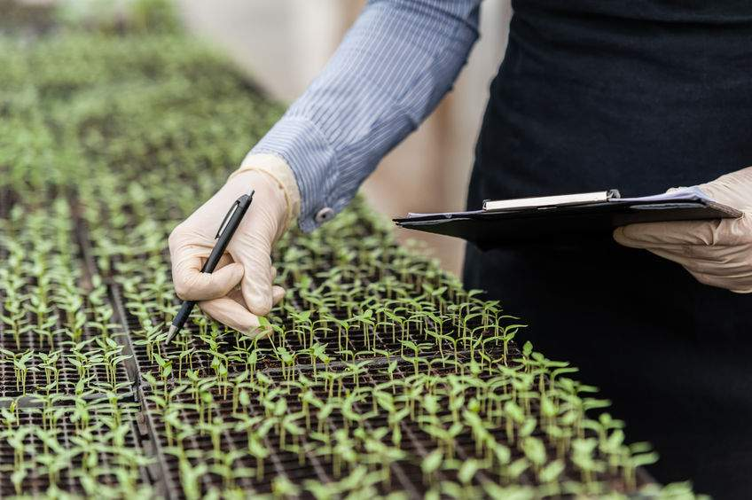 A lack of knowledge hinders further improvements in GM yield