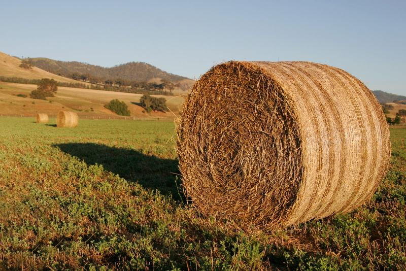 The wet summer and autumn has left many livestock farms short of forage going into the winter