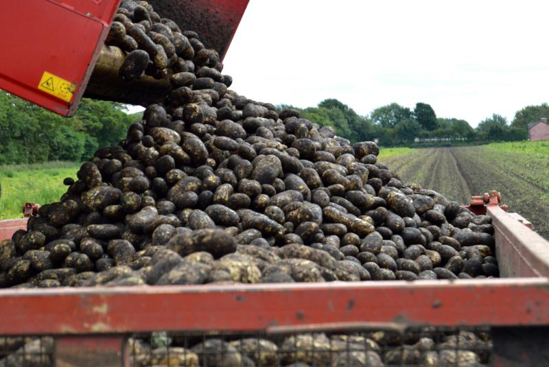 Red Tractor fresh produce standards to be recognised by Tesco and GLOBAL G.A.P.