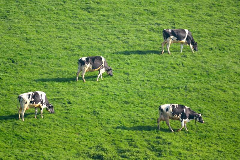 Farmers are being encouraged to use the hashtag #FebruDairy to celebrate all things dairy