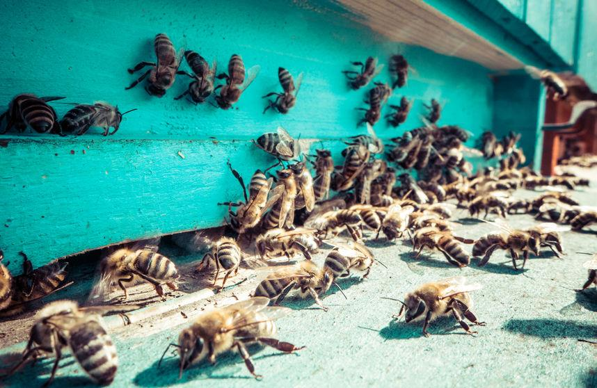 Forty hives, or one million bees, have been stolen from a farmer's field in Oxfordshire (Stock photo)