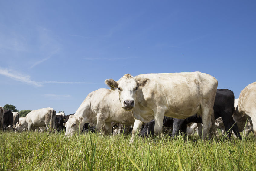 UK farm to fork traceability will be championed though the new livestock service