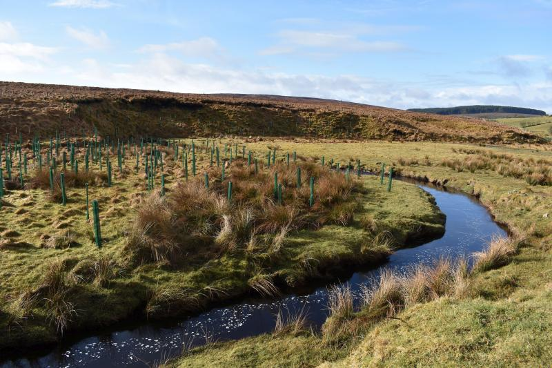 Farmers have helped plant native trees on the banks of the Burntollet River, Glenconway, Faughan Valley