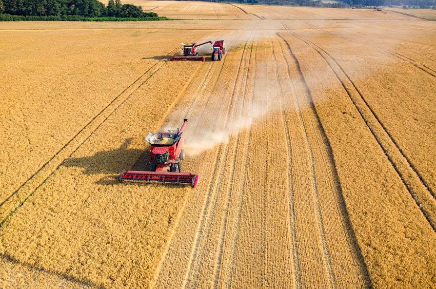 The report shows that there is currently growing demand for organic feedstuffs in the UK, which cannot be met by the existing amount of organic arable crops produced in Britain