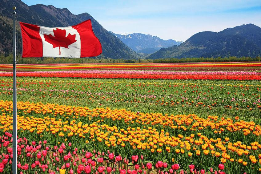 Canada is currently the sixth largest importer of British food products