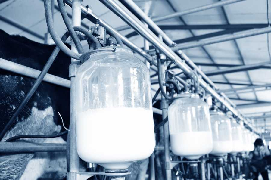 More milk is needed to cater for an increased global, prosperous population