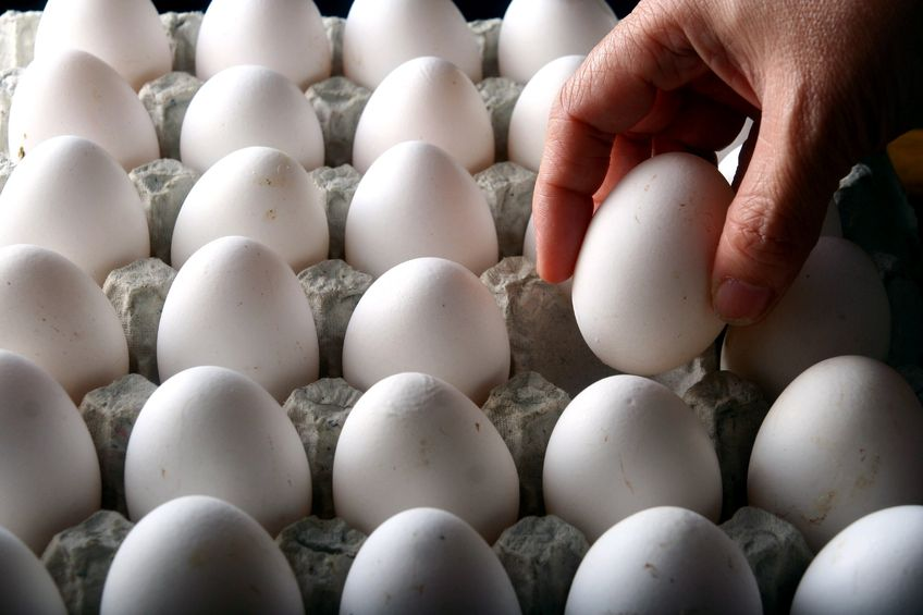 A batch of organic eggs in Germany has been found to have been infected with salmonella enteritidis
