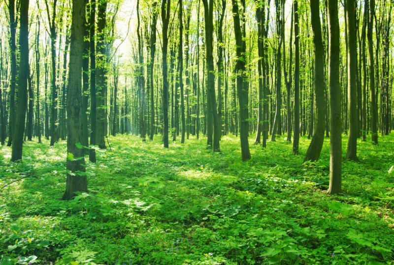 Woodland carbon credits provide incentives to cut UK emissions